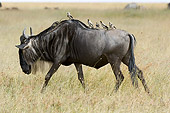 AFW 03 NE0002 01