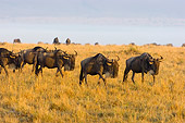 AFW 03 NE0004 01