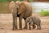 AFW 04 GL0005 01