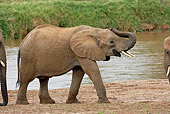 AFW 04 GL0006 01
