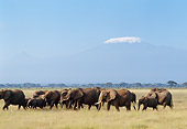 AFW 04 GL0010 01