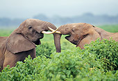 AFW 04 GL0013 01