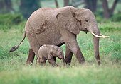 AFW 04 GL0017 01