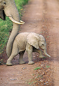 AFW 04 GL0018 01