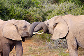 AFW 04 HP0006 01