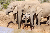 AFW 04 HP0007 01
