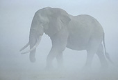 AFW 04 JE0002 01