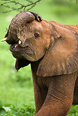 AFW 04 MC0002 01