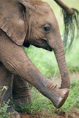 AFW 04 MC0008 01