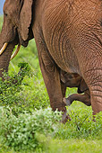 AFW 04 MC0023 01
