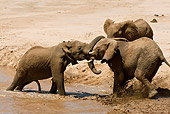 AFW 04 MC0038 01