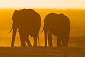 AFW 04 MC0056 01