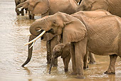 AFW 04 MC0058 01