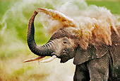 AFW 04 MH0001 01