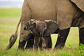 AFW 04 MH0024 01