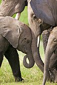 AFW 04 MH0029 01