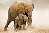 AFW 04 MH0030 01