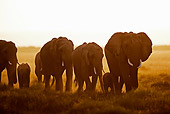 AFW 04 MH0051 01