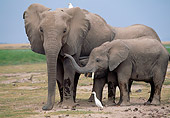 AFW 04 MH0054 01