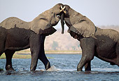 AFW 04 MH0056 01