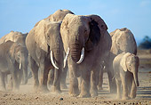 AFW 04 MH0066 01