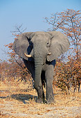 AFW 04 MH0073 01