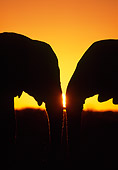 AFW 04 MH0078 01