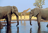 AFW 04 MH0079 01