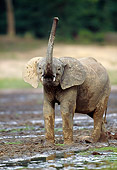 AFW 04 MH0085 01