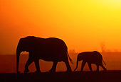 AFW 04 MH0091 01