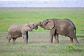 AFW 04 NE0006 01