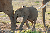 AFW 04 NE0007 01