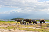 AFW 04 NE0009 01