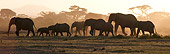 AFW 04 NE0011 01