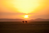 AFW 04 NE0016 01