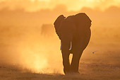 AFW 04 NE0017 01