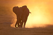 AFW 04 NE0018 01
