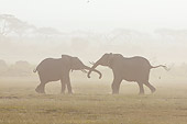 AFW 04 NE0019 01