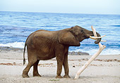 AFW 04 RK0028 06