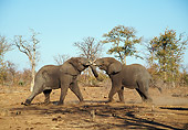 AFW 04 WF0003 01