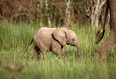 AFW 04 DB0005 01