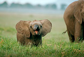 AFW 04 DB0006 01