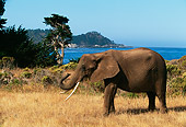 AFW 04 RK0062 06