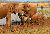 AFW 04 TL0002 01