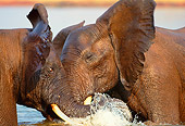 AFW 04 TL0003 01