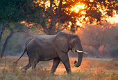 AFW 04 TL0005 01