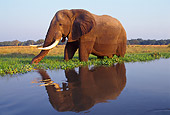 AFW 04 TL0006 01