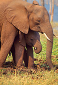 AFW 04 TL0007 01