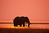 AFW 04 TL0010 01