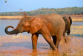 AFW 04 TL0013 01